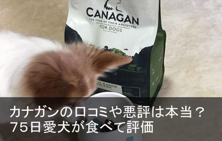 カナガン 口コミ