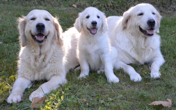 カナガン大型犬